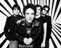 The Wallflowers online